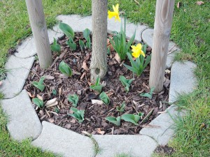 Frühlingsbepflanzung1