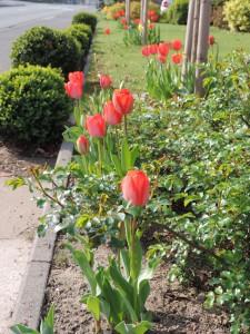 Frühlingsbepflanzung6
